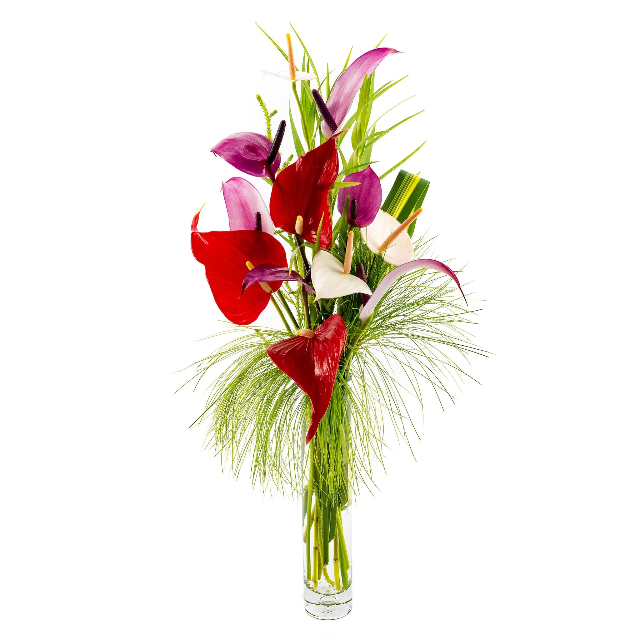 Tulip Anthurium Mix