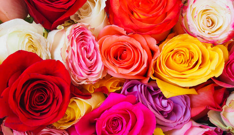 Colored Roses and Their Meaning