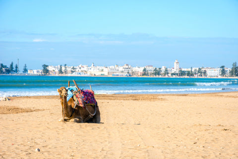Moroccan Seaside and Camels