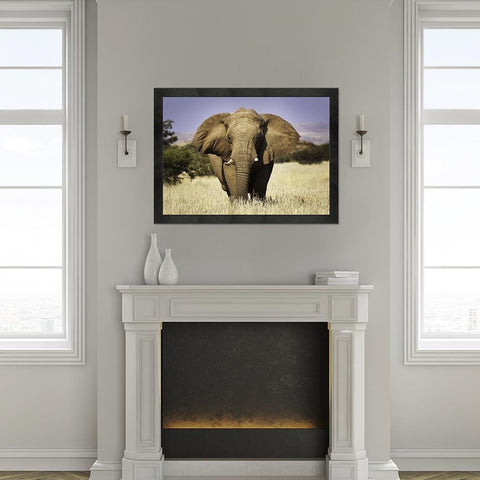 Elephant (Canvas) - Redline Steel