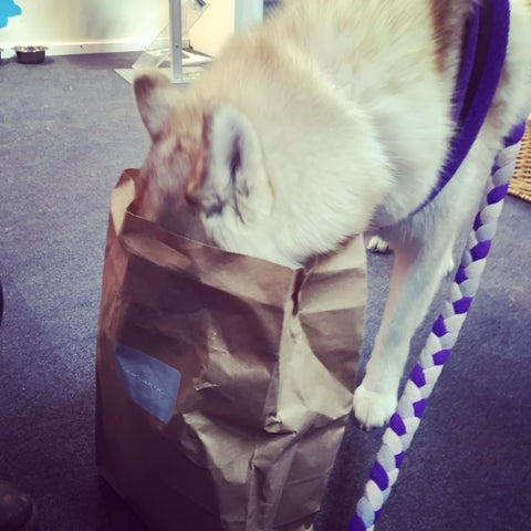 @huskymika checking out the goodies we brought along for the Dogs of Instagram