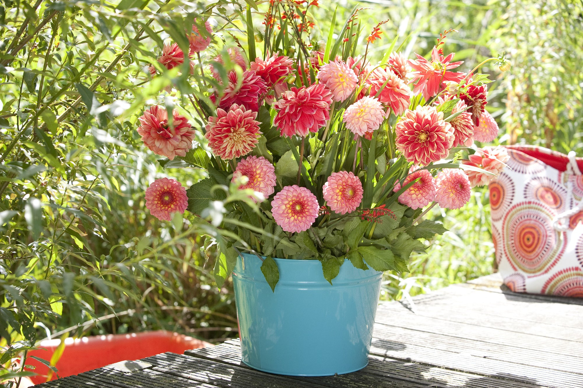 Be Sure to Plant Your Dahlias Soon