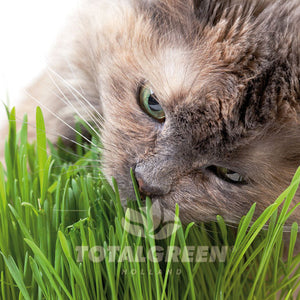 Cats Grass Grow Kit