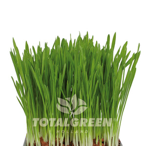 Cat Grass Grow Kit