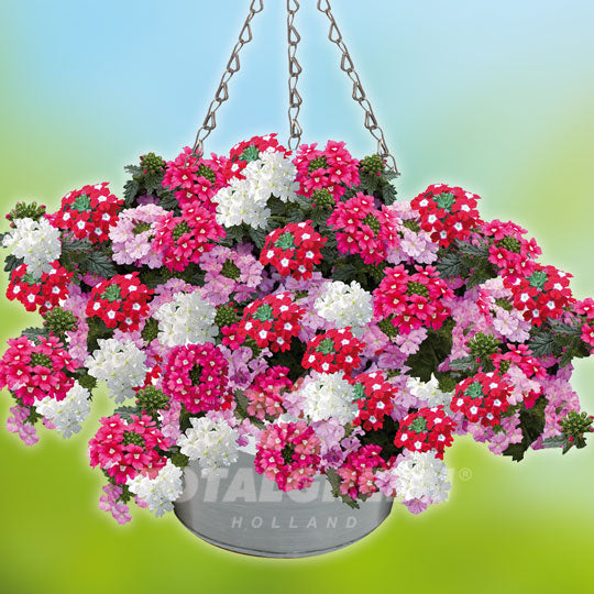Hanging Basket Grow Kits Growing Instructions Totalgreen Holland