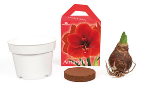 Unique Amaryllis Grow Kit - Amazon