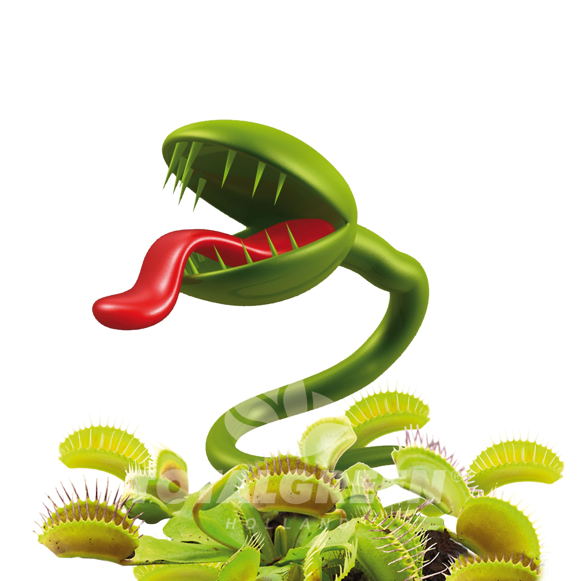 Venus Fly Trap Grow Kit