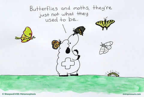 Sheepwell of Evenpressure: No offense butterflies and moths, it's a science joke