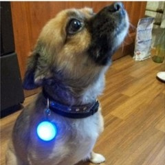 Bright Pet Dog Push Button Switch LED Night Safety Flash Light for Collar