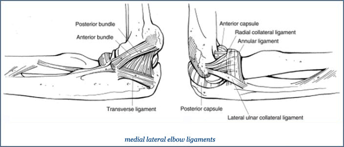 Normal elbow anatomy. Left, Ligaments of the elbow.