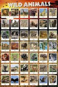NAT31189 - Wild Animals Collage 24x 36