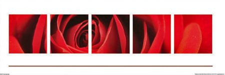 "FAR50001"" Red Rose - Burgeoning"" (12 X 36)"