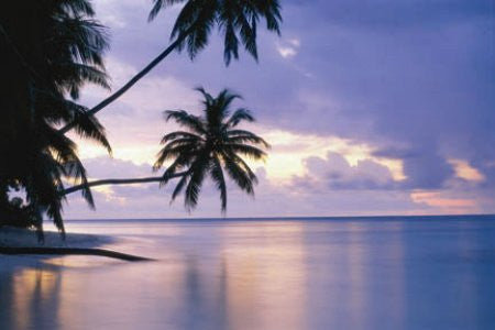 "NAT90001"" Tropical Sunset - Palm Trees Over Water"" (24 X 36)"