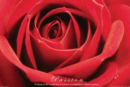 "ISP90001"" Red Rose - Passion"" (24 X 36)"