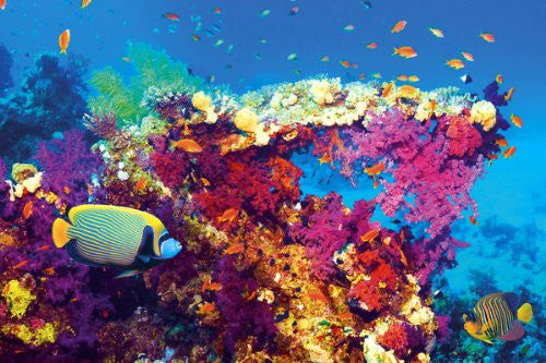 NAT90045 - Tropical Underwater 24x36