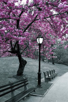 Central Park in Blossom (24x36) - ARC32678