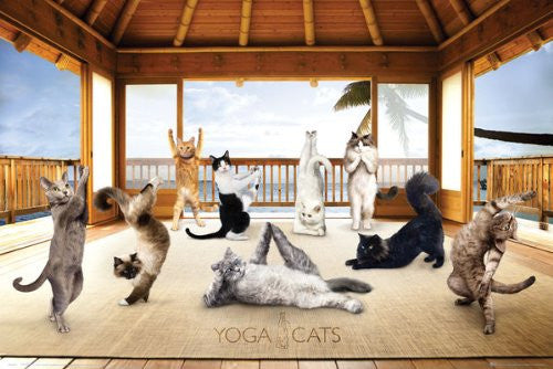Yoga Cats Hut (24x36) - HMR50042