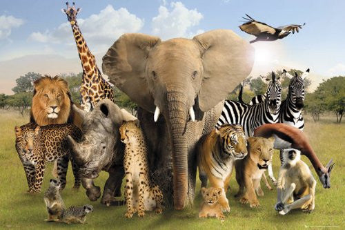 NAT90008 Wild World Animals 24X36