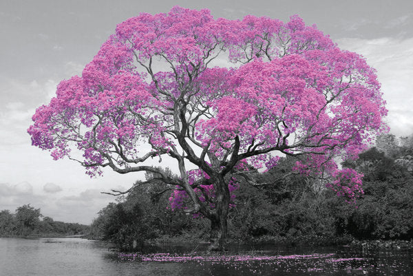 Blossomed Tree (24x36) - ARC32694