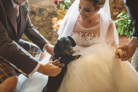 Weddings dog ring bearer bowzos Harris tweed dachshund Edinburgh frankie