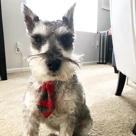 (Brodie) Bowzos Harris Tweed Dog Tie - Red/Grey Check - BOWZOS
