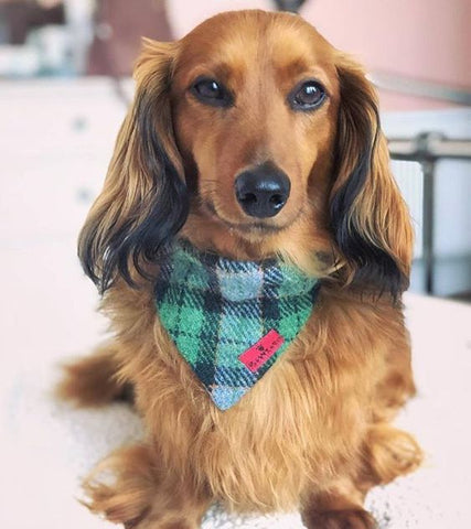 (Grass Green) Bowzos Harris Tweed Bandana - Green Check - BOWZOS