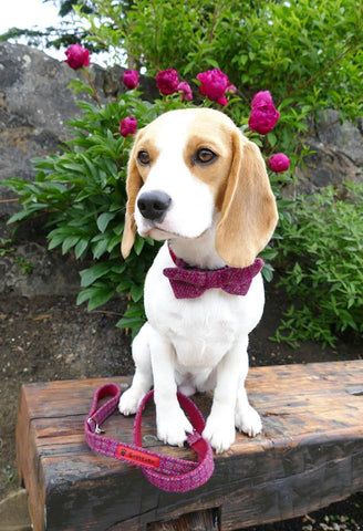 (Kellie) Harris Tweed Bow Tie Dog Collar & Lead Set - Pink Kaona - BOWZOS