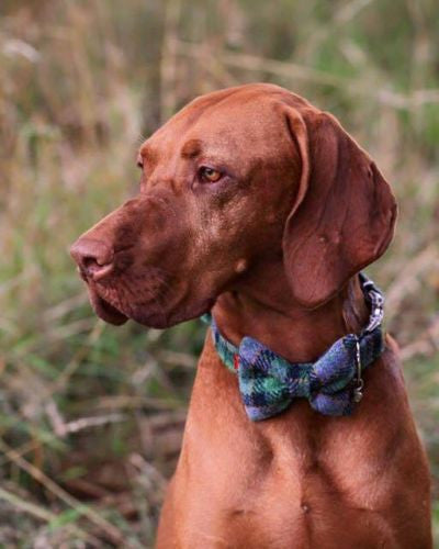 Harris Tweed Bow Tie Dog Collar - Grass Green Check - BOWZOS