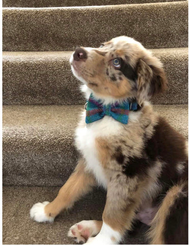 (Tiree) Tweed Bow Tie Dog Collar - Turquoise Check - BOWZOS