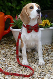 (Arran) Harris Tweed Bow Tie Dog Collar & Lead Set - Orange Check - BOWZOS