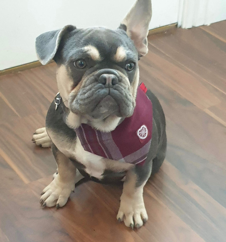 The Hearts FC Bowzos Dog Bandana - BOWZOS