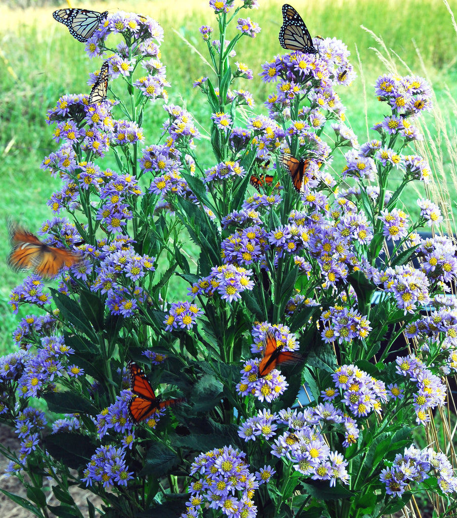 Growing a Butterfly Garden- Easy Plants for Butterfly Habitats