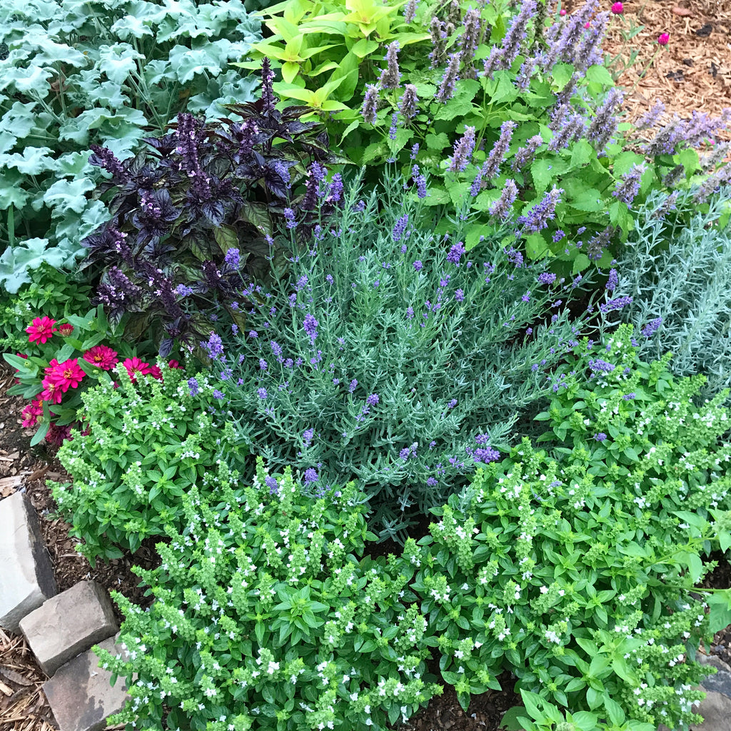Growing an Herb Garden- Beautiful and Ornamental Herbs for the Garden- Part One
