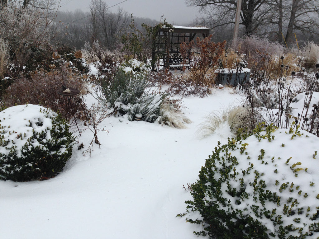 The Winter Garden- Adding Color and Winter Interest to the Garden