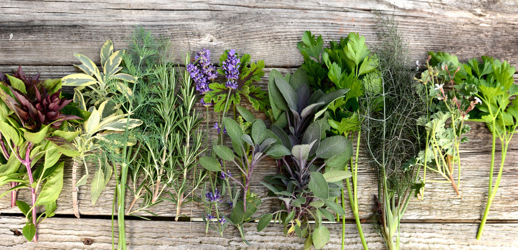 Heirloom Herb Garden Seeds Herb Basket Collection