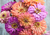 Mountainlily Farm Mixed Zinnia Seeds