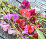 Heirloom Seeds Balsam Flowers