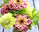Heirloom Zinnia Seeds for sale