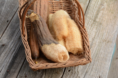 Luffa Gourd Seeds for Sale