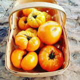Orange Tomato Heirloom Tomato Seeds