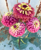 Queen Red Lime Zinnia for Cut Flower Gardens