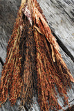 Dried Broomcorn Great For Autumn Decorating