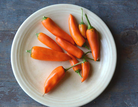 Bulgarian Carrot Pepper Seeds