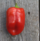 Red Bell pepper Bull Nose Pepper Seeds