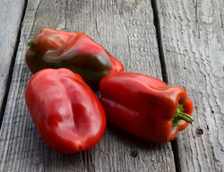 Bull Nose Red Bell Pepper Seeds