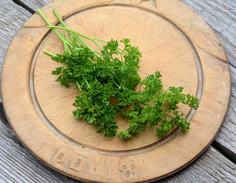 Curled Parsley Seeds