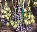 Lavender flowers in drying shed