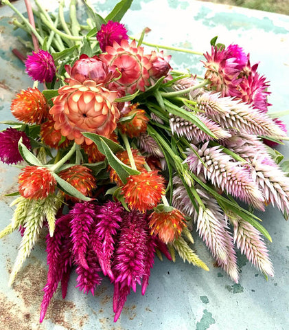 Heirloom Seeds for Dried Flowers