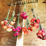 Easy to Grow Dried Flowers