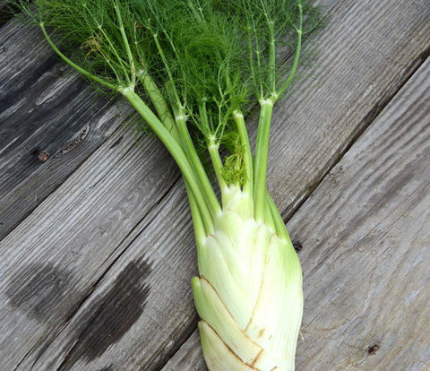 Florence Fennel Seeds Green Fennel